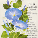 Poetic inspiration – Heavenly Blue morning glories