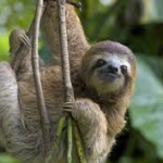 Is Sloth Still a Deadly Sin?